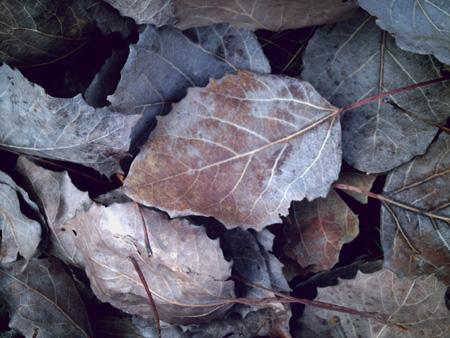 Fall Leaves, National Mine, Michigan -- copyright Kim Nixon