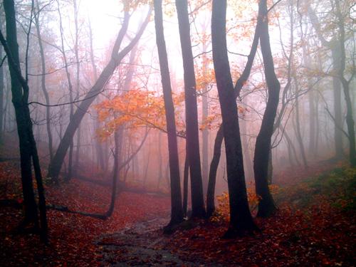 Mist Woods, Copyright Kim Nixon 2007