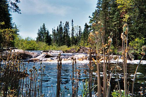 Spring Trip 2007, copyright Kim Nixon