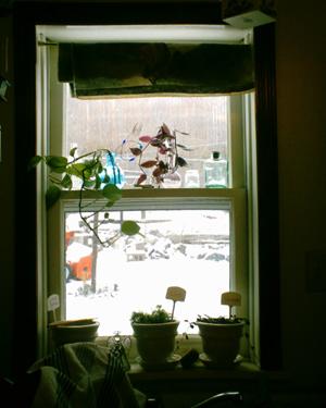 Baby Plants One Year Ago, copyright Kim Nixon