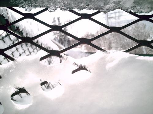 April Fool's Day, Trapped by Winter, Copyright Kim Nixon