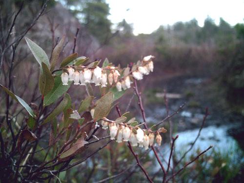 Blooming at Wetmore, photo copyright by Kim nixon
