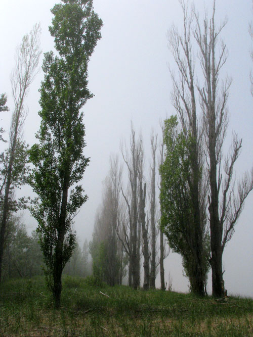 Some Live in Mist, photo by Kim Nixon