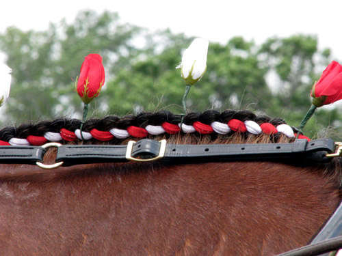 Clydesdale Braid, photo by Kim Nixon