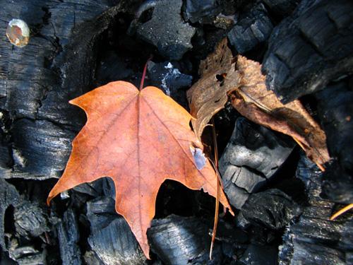 Fall Ashes, photo by Kim Nixon