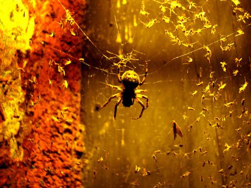 Fort Wilkins Spider, August 2008, photo copyright Kim Nixon