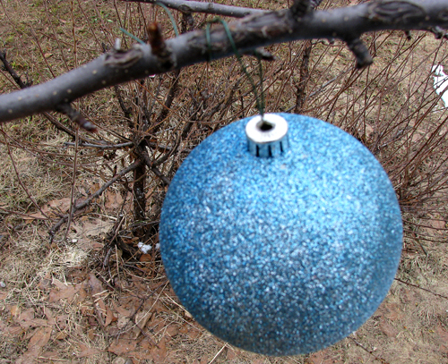 Blue Balls III, Photo by Kim Nixon