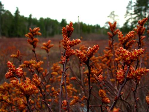 Spring Orange Before Rain, photo by Kim Nixon